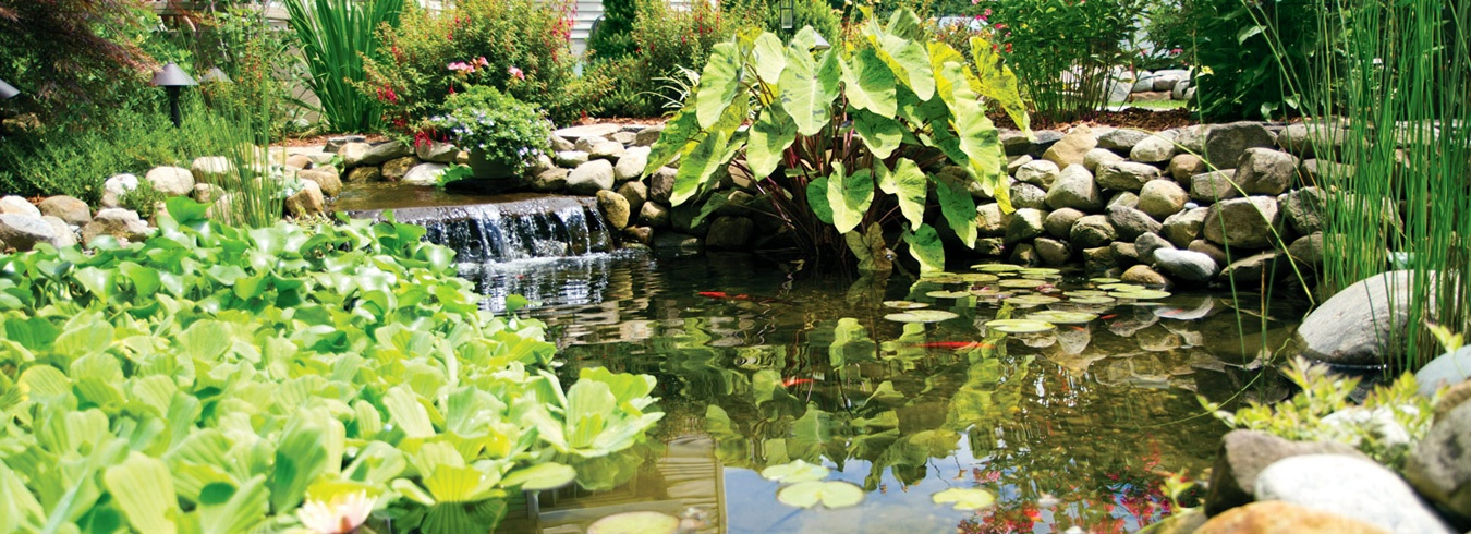 water feature waterfall with koi pond